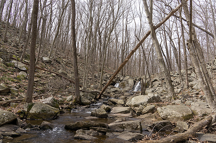 trout brook