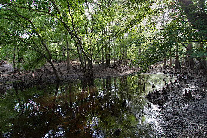 shady swamp