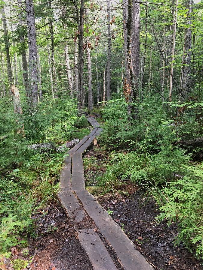 raised trail