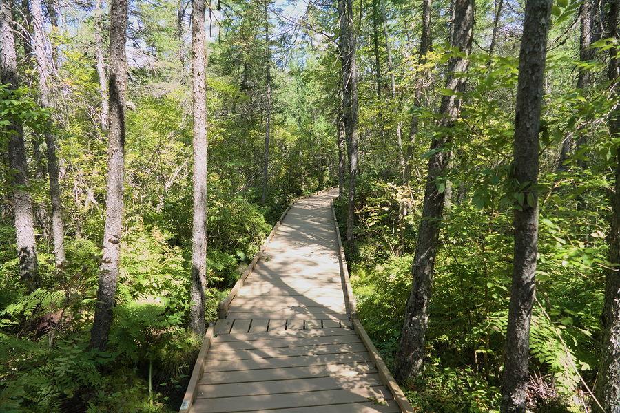 Station 2 - Conifer Wooded Fen