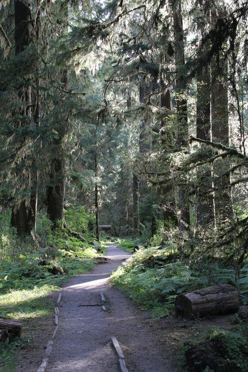 hoh trail