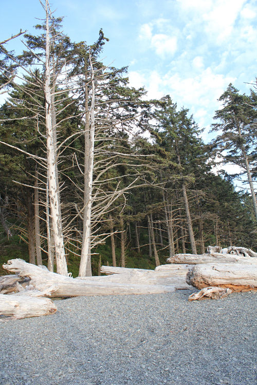 rialto trees