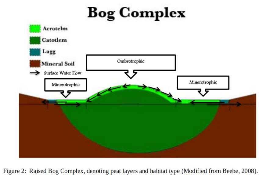 BoxComplex_Fig2_Susan_Priest_2012